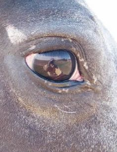 1000 Images About Equine System Vision On Pinterest