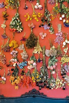 Bunches of dried flowers by Duet Postscriptum - Dried, Flower - Stocksy United Flower Room, Flower Wall, Dried Flower Bouquet, Dried Flowers, Same Day Flower Delivery, Hanging Flowers, Red Walls, Bunch Of Flowers, Valentines