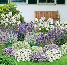 My beautiful garden Bee-friendly perennial border, 21 plants online cheap - Balkon Garten - Flowers Perennials, Planting Flowers, Flower Gardening, Flowers Garden, Garden Beds, Garden Plants, Vegetable Garden, Herb Plants, Amazing Gardens