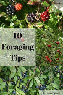 Eco-Gites of Lenault: 10 Foraging Tips