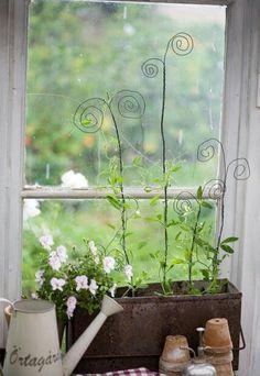 Great way to get plants to climb #indoorgarden #DIY ✿