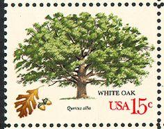 White oak [1978-10-09]