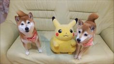 Who doesn't love doge in the morning :) - Imgur