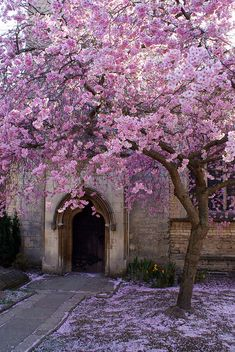 Pretty tree in Stamford by Gary Curtis