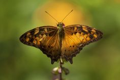 Butterfly by EDEMIN RAMIREZ viewfinder image production on 500px