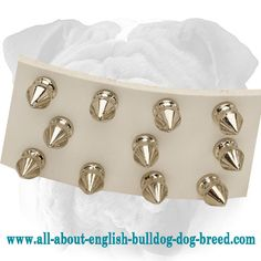 Fashion #Spiked White #Leather #Dog #Collar for #English #Bulldog $59.90 | www.all-about-english-bulldog-dog-breed.com