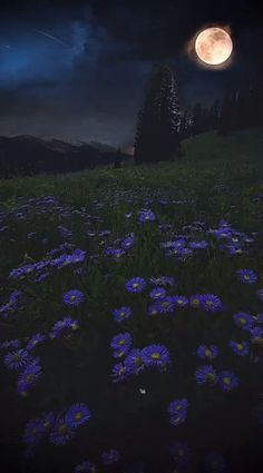 Night Aesthetic, Nature Aesthetic, Aesthetic Indie, Aesthetic Movies, Aesthetic Videos, Aesthetic Backgrounds, Dark Backgrounds, Aesthetic Pictures, Aesthetic Wallpapers