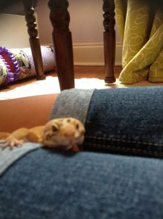 Petrie crawling out of his leg cave