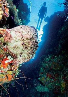 The 7000' wall is a sight not to be missed when diving in Grand Turk.