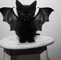 Vampire cat! Too adorable!!!!