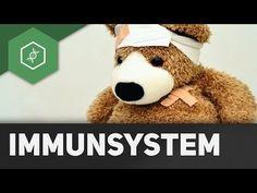 Bestandteile des Immunsystems - Einführung - YouTube