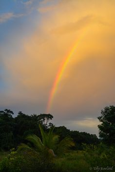 Rainbow  Guyana #americacentral #sudamerica