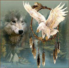 16 Meilleures Images Du Tableau Aigles Et Loups Native American