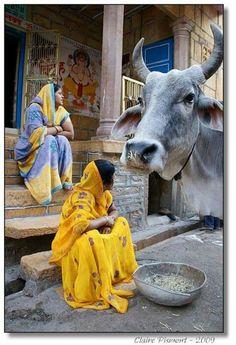 Just another day in Jaisalmer - India Jaisalmer, Varanasi, Mother India, Rajasthan India, India India, Jaipur, Amazing India, India Culture, India People