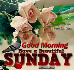 Good Morning Have A Beautiful Sunday Quote With Flowers good morning sunday sunday quotes happy sunday sunday blessings sunday quote happy sunday quotes good morning sunday beautiful sunday quotes Blessed Sunday Morning, Good Morning Sunday Images, Sunday Pictures, Good Morning Good Night, Morning Blessings, Sunday Wishes, Sunday Greetings, Morning Msg, Happy Sunday Flowers