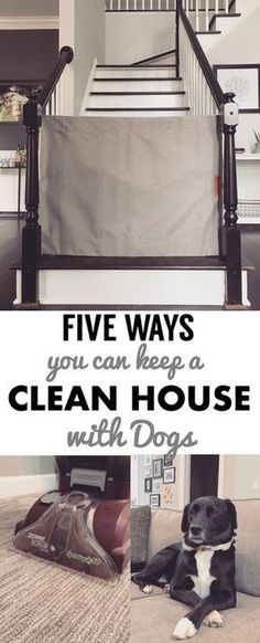 dog hacks How to keep a clean house when you have a dog: Cleaning tips and tricks for pet owners dog-proofing / puppy proofing a home. Clean house hacks for living with pets! Dog Cleaning, Deep Cleaning Tips, House Cleaning Tips, Diy Cleaning Products, Spring Cleaning, Cleaning Hacks, Clean House Tips, Cleaning Supplies, Tips And Tricks