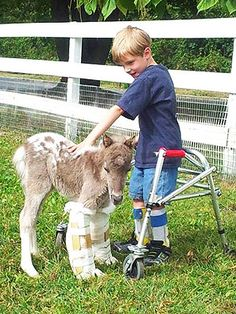 Boy, Miniature Horse Find Friendship Over Shared Disability
