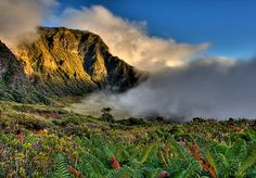 The Paliku Rainforest, Maui, Hawaii by Randy Jay Braun
