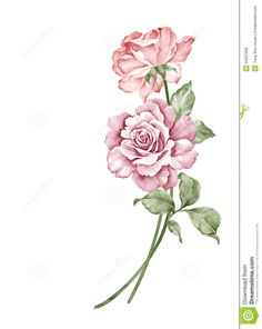 watercolor-illustration-flower-set-simple-white-background-50837308.jpg (1035×1300)