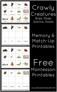 Free Montessori Memory and Match Up Printables ~ Crawly Creatures {Minibeasts}