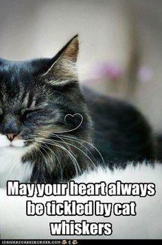 Cat Whisker, heart shaped