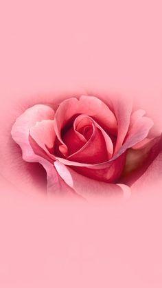 Power Wallpaper, Iphone Wallpaper Video, Flower Phone Wallpaper, Cellphone Wallpaper, Pink Wallpaper, Aesthetic Iphone Wallpaper, Galaxy Wallpaper, Beautiful Flowers Wallpapers, Beautiful Roses