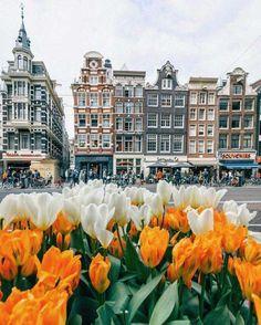 Vista de la plaza Dam, Ámsterdam, Holanda - |Pinterest @xioohh❥|
