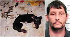 Man Kept 6 Dogs Locked In A Trailer With No Food Or Water For 6 Months! Demand A Severe Punishment! | PetitionHub.org