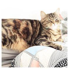 Hello ma June !  #june #cat #instacat #instabed #alacool #catmood by charlottofraiz http://www.australiaunwrapped.com/