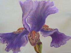 Purple Iris  painted on 12 x 16 wrapped canvas  by VKellyDesign