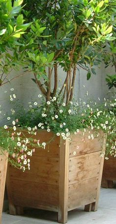 Love the planter, and Just think the small tree and fairy like flower combo is just perfect!