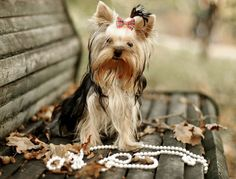 Cute dogs images, Dog and a necklace  A Healthy Dog is a Happy Dog / www.PetWellbeing.org