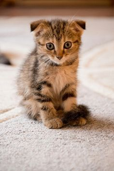 In case you have not noticed, I love cats :)