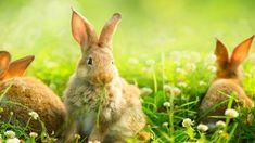 easter bunnies For Facebook, Emoticon, Easter Bunny, Bunnies, Ted, Smiley, Rabbit, Bunny