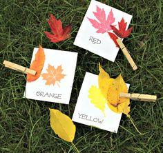 Classer les feuilles selon leurs couleurs