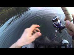 primo big bass 2016 a split shot dal belly boat - YouTube