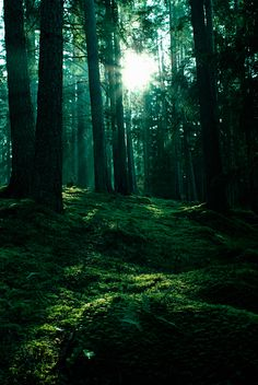 "500px / Photo ""waltz of sunlight and moss"" by Nathan Wright"