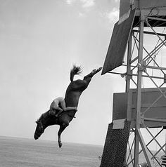 Starting in 1905 and ending in 1978, Atlantic City featured diving horses. The horses were trained to dive into the water from a platform with girls on their back from 2-4 times daily.