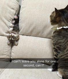 Cats crazy