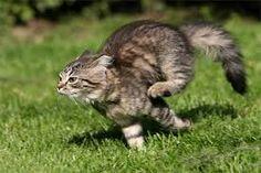 Výsledek obrázku pro running cat