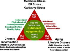 Nature or nurture: let food be your epigenetic medicine in chronic inflammatory disorders.