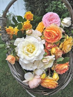 from Susan Branch blog.  These flowers are so beautiful.
