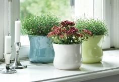 A breath of fresh air for the windowsill...Mano Urtepotter
