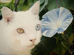 ふくまる Fukumaru the cat