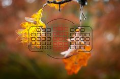 Look through the viewfinder of any DSLR camera and you will see several dots, or squares, that represent individual points at which the camera is capable of focusing. The purpose of these focusing points may seem fairly obvious, but not all of them are created equal. When you press the shutter button (or back button) …