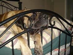 hahaha. comfy spot for a snooze.