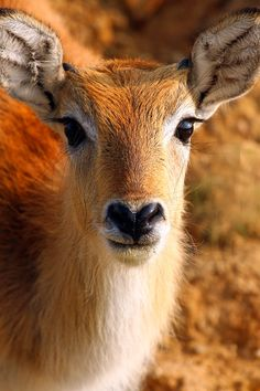 wild animals | bambi