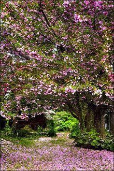Carpet of pink tall version in Washington, Virginia