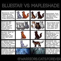 Bluestar vs. Mapleshade. do you feel bad for Mapleshade? If you look at it this way, it was all Appledusk's fault cause he truly didn't love Mapleshade!!!!!