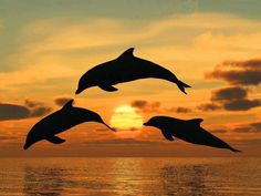Dolphins at Sunset, Looks like a painting.